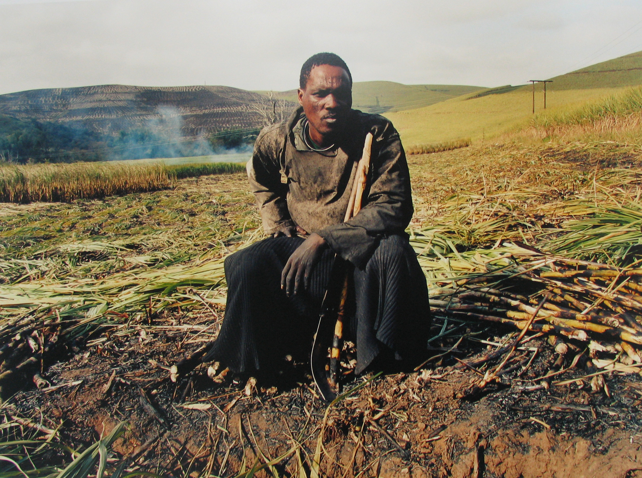 Zwelethu Mthethwa: Untitled (from Sugar Cane series), chromogenic print, 2007